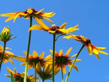 Flowers on blue sky background Royalty Free Stock Photography