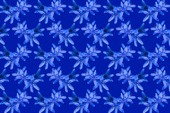 Flowers blue snowdrops pattern background Stock Photography