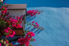 Flowers and blue wall. Blue wall. Flowers and blue wall. Juzcar village, Malaga province. Costa del Sol, Andalusia, Spain Royalty Free Stock Photography