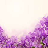 Flowers Bluebell on Floral Background Royalty Free Stock Image