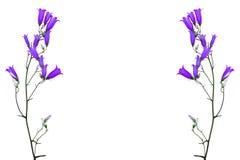 Flowers bluebells Royalty Free Stock Photo