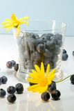 Flowers and blueberries. Blueberries inside clear glass on reflective surface and yellow flowers over aqua paper background Royalty Free Stock Photos