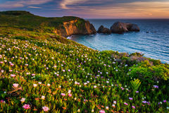 Flowers on a bluff above Rodeo Beach at sunset  Royalty Free Stock Photos