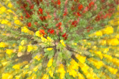 Flowers in blur ligh in yellow and red Stock Photography