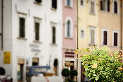 Flowers with blurred houses Royalty Free Stock Image