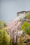 Flowers with blurred view of the Potala Palace, Lhasa Royalty Free Stock Image