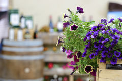 Flowers with blurred wine barrel Royalty Free Stock Photography