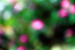 Flowers bokeh background. Pink and green flowers bokeh background Royalty Free Stock Photos