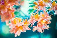 Flowers and bokeh. Nature background stock photo