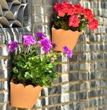 Flowers of bonsai Stock Photo