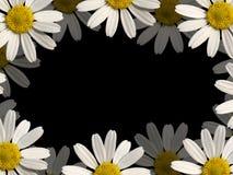 Flowers border. White flowers border on black paper Royalty Free Stock Images