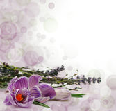 Flowers border. Beautiful floral background Stock Image