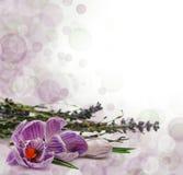 Flowers border Stock Image