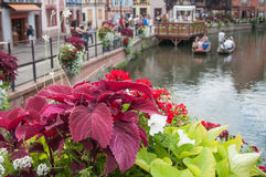 flowers in border channel in Colmar Royalty Free Stock Images