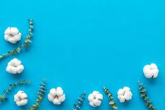 Flowers border with green eucalyptus branches and dry cotton on blue background top view copy space. Blog mockup. Flowers border with green eucalyptus branches stock photo