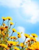 Flowers border over sky Stock Image
