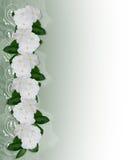 Flowers Border white Periwinkle Stock Image