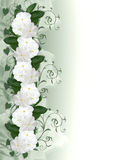 Flowers Border white Periwinkle Royalty Free Stock Photos