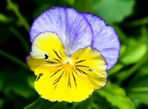 Flowers at a botanic garden Stock Photos
