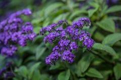 Flowers in botanic garden Stock Image