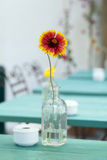 Flowers in a  bottle Royalty Free Stock Photography