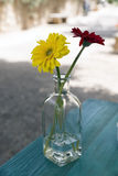 Flowers in a  bottle Stock Images