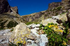 Flowers, boulder and dark blue sky Royalty Free Stock Photography
