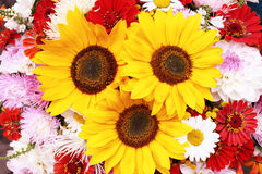 Flowers bouquet. Sunflower aster daisywheel Stock Photo