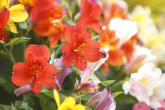 Flowers bouquet Stock Photography