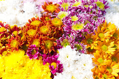 Flowers bouquet Royalty Free Stock Image