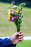 Flowers bouquet. A wildflowers bouquet in the hand of a child Stock Photo