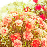 flowers bouquet arrange for decoration in home vi Royalty Free Stock Images