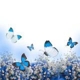 Flowers in a bouquet, blue hydrangeas Royalty Free Stock Image
