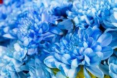 Flowers, bouquet of bright blue chrysanthemums. Horizontal close-up shot Stock Photos