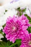 Flowers bouquet, close-up Stock Photos