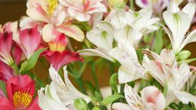 Flowers Bouquet with Lilies. Flowers bouquet with red, pink and white lilies and green leaves in flower shop stock video