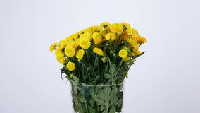 Flowers, bouquet, rotation on white background, floral composition consists of yellow Chrysanthemum santini.  stock video