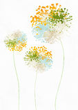 Beautiful floral background. Flowers bouquet on white background Stock Image