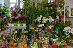 flowers and bouquets stand in a florist`s shop stock photo
