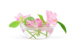 Flowers in a bowl. Flowers floating in a bowl with fresh water. Isolated on white Stock Photo