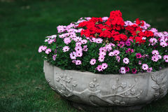Flowers bowl stock photos