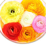 Flowers in bowl Royalty Free Stock Images