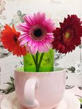 Flowers in bowl. Gerbera& x27;s three colors Royalty Free Stock Photography