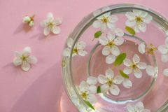 Flowers in bowl of water Royalty Free Stock Images