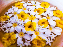 Flowers in a bowl of water. Yellow & White flowers in a bowl of water Royalty Free Stock Photography