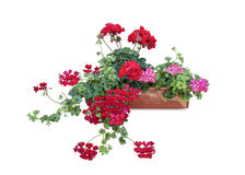 Flowers in the box. Royalty Free Stock Photography