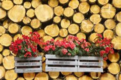 Flowers boxes hanging on a timber stack - Home sweet home writte. N on wooden box royalty free stock image