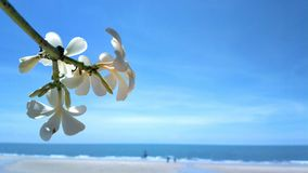 The flowers branch on beach Stock Photos