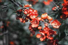 Flowers branch in the garden Stock Photography
