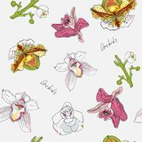 Flowers and branch of orchid vector illustration. Pink, green, y stock illustration